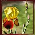 My Painted Iris by Susan Kinney