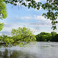 My Place By The River by Bill Lere