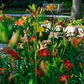 My Secret Garden-5 by Robert Pearson