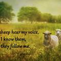 My Sheep Hear My Voice by Priscilla Burgers