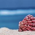 My Shell by Evgeniya Lystsova