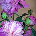 My Spring Garden Peony by Jane Butera Borgardt