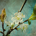 My Springtime by Angela Doelling AD DESIGN Photo and PhotoArt