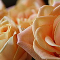 My Sweet Roses by Gilda Womack
