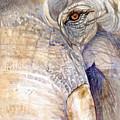 My Tiny Eye - Asian Tusker by Sasitha Weerasinghe