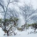 My Winter Love by Mioara Andritoiu