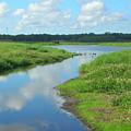 Myakka River Reflections by Emmy Vickers