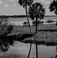 Myakka River Reflections by Susan Molnar