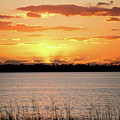 Myakka Sunset by Leona Strong