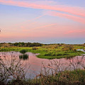 Myakka Wetlands By H H Photography Of Florida by HH Photography of Florida