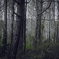 Myakka Woods by Michael Frizzell