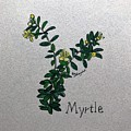 Myrtle by Elizabeth Hazelet