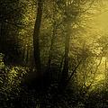 Mysterious Forest by Georgiana Romanovna
