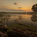 Mysterious Morning Time In Swamp Area. Landscape by Dmytro Kosmenko