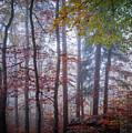 Mystery In Fog by Elena Elisseeva