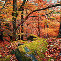 Mystery Of Autumn by Jenny Rainbow