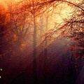Mystic Forest At Dawn L A by Gert J Rheeders