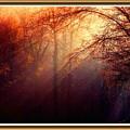 Mystic Forest At Dawn L B With Alternative Decorative Ornate Printed Frame by Gert J Rheeders
