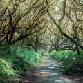 Mystical Angel Oaks  by Debra and Dave Vanderlaan