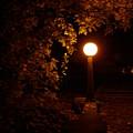 Mystical Light by John Loyd Rushing