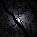 Mystical Moon by Stephanie Hanson