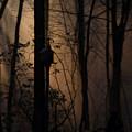 Mystical Woods by Douglas Barnett