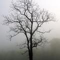 Mysty Tree 3 by Marty Koch