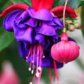 Name It Beautiful by Iryna Goodall