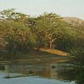 Namibian Waterway by Ernie Echols