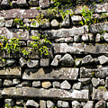 Nan Madol Wall2 by Dan Norton