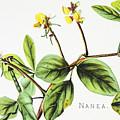 Nanea Flower Art by Hawaiian Legacy Archive - Printscapes