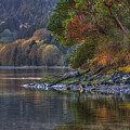 Nanoose Morning by Randy Hall