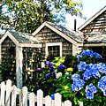 Nantucket Cottage No.1 by Tammy Wetzel