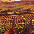 Napa Carneros Summer Evening Light by Takayuki Harada