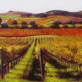 Napa Carneros Vineyard Autumn Color by Takayuki Harada