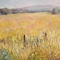 Napa Fields by Wyn Ericson