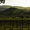 Napa Valley Panorama From The Silverado Trail by Mark Emmerson