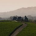Napa Valley by Peter Verdnik