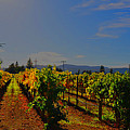 Napa Valley  by Vijay Sharon Govender