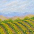 Valley Vineyard by Jerome Stumphauzer
