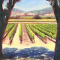 Napa Wine Vineyard Summer by Takayuki Harada