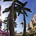 Naples Florida V by Tina Baxter