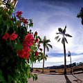 Naples Florida Xii by Tina Baxter