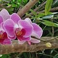 Naples Orchid 1 by Pam Schmitt