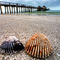 Naples Pier Seashells Naples Fl Florida by Toby McGuire
