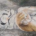 Napping by Maris Sherwood