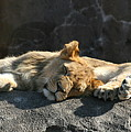 Naptime For The Twins by David Dunham