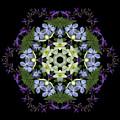 Narcissus Group 2 by Marsha Tudor