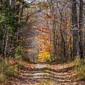 Narrow Road by Diane Moore