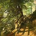 Narrow Road by Inesa Kayuta